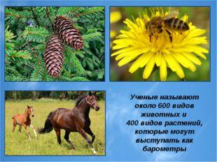 Ученые называют около 600 видов животных и 400 видов растений, которые могут