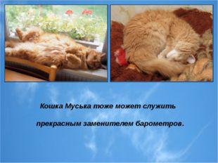 Кошка Муська тоже может служить прекрасным заменителем барометров.