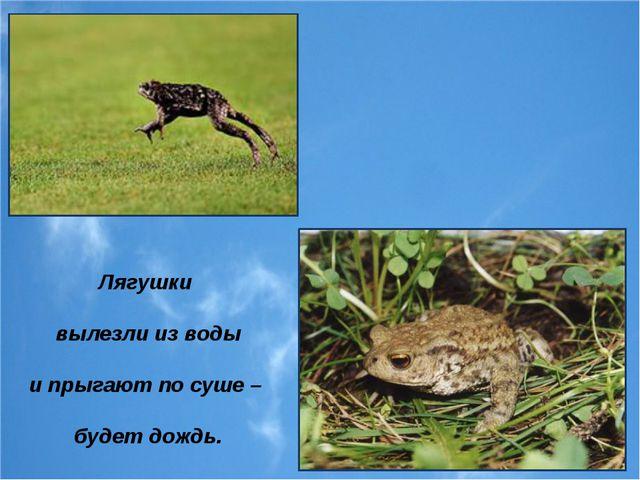 Лягушки вылезли из воды и прыгают по суше – будет дождь.