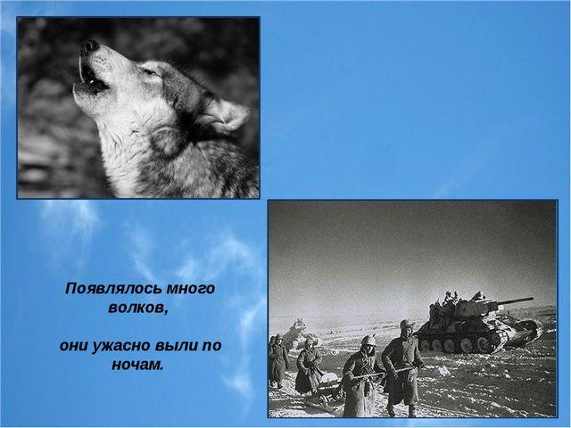 Появлялось много волков, они ужасно выли по ночам.