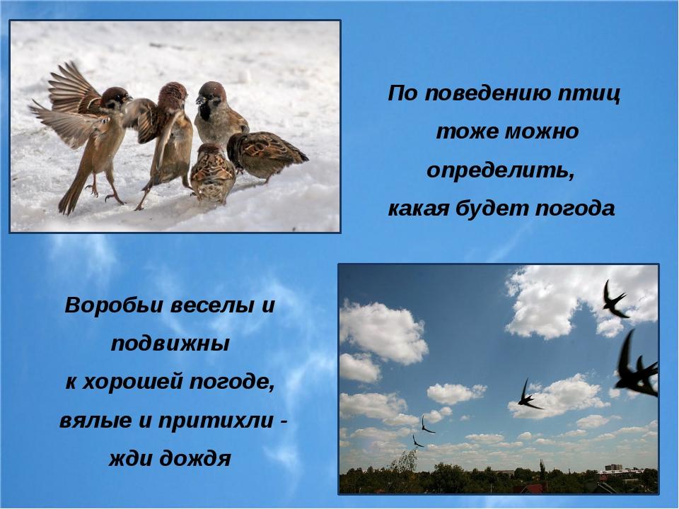 По поведению птиц тоже можно определить, какая будет погода Воробьи веселы и...