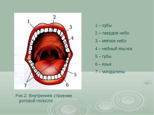 1 – зубы 2 – твердое небо 3 – мягкое небо 4 – небный язычок 5 – губы 6 – язык