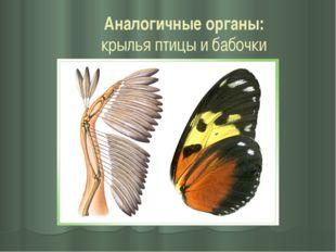 Аналогичные органы: крылья птицы и бабочки