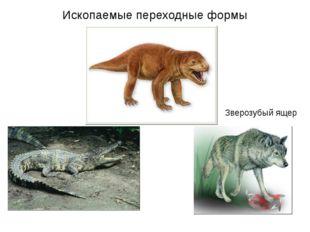 Зверозубый ящер Ископаемые переходные формы