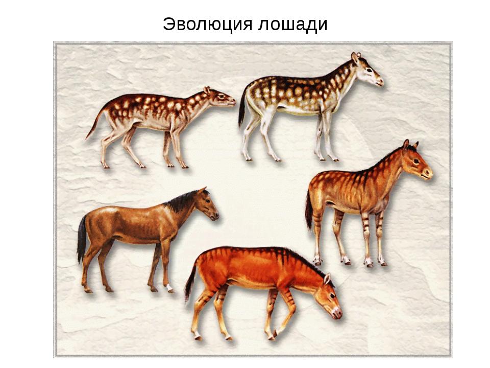 Эволюция лошади Палеонтологическое доказательство