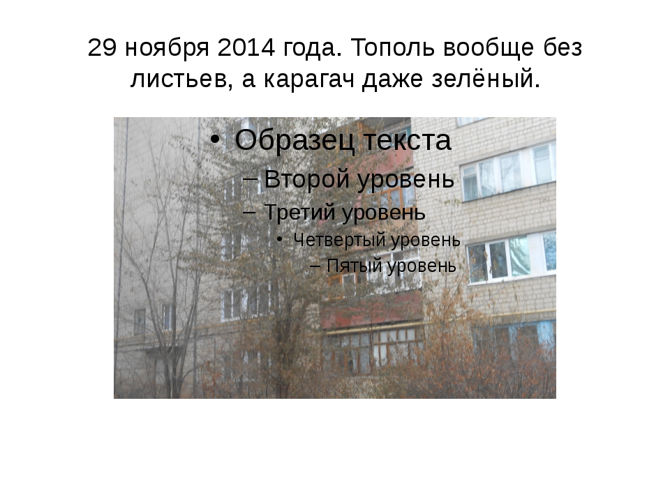 29 ноября 2014 года. Тополь вообще без листьев, а карагач даже зелёный.