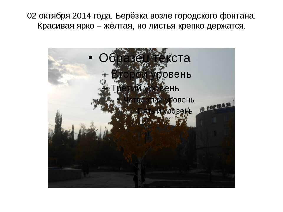 02 октября 2014 года. Берёзка возле городского фонтана. Красивая ярко – жёлта...