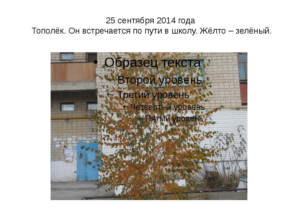 25 сентября 2014 года Тополёк. Он встречается по пути в школу. Жёлто – зелёный.