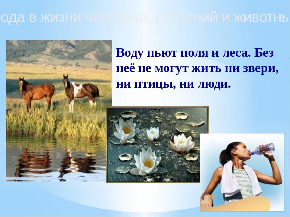 Вода в жизни человека, растений и животных Воду пьют поля и леса. Без неё не...