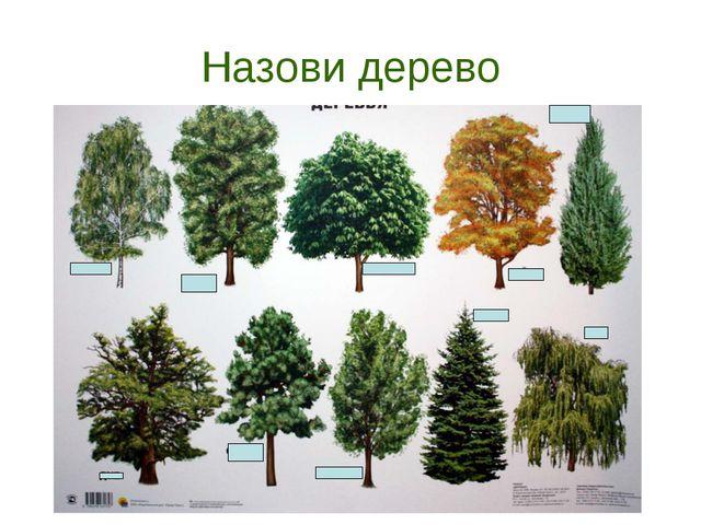 Назови дерево