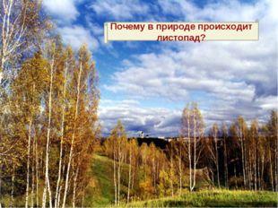 Почему в природе происходит листопад?