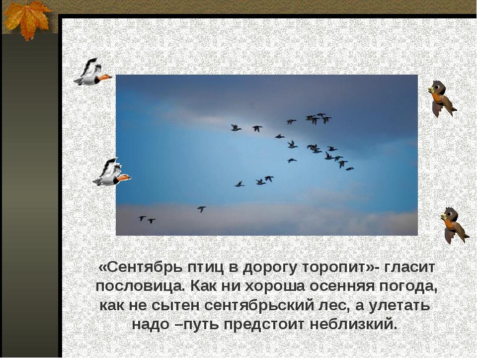 «Сентябрь птиц в дорогу торопит»- гласит пословица. Как ни хороша осенняя по...