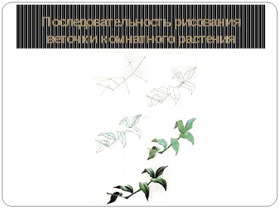 Последовательность рисования веточки комнатного растения