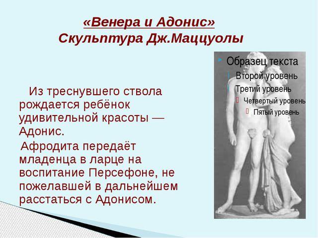 «Венера и Адонис» Скульптура Дж.Маццуолы Из треснувшего ствола рождается ребё...