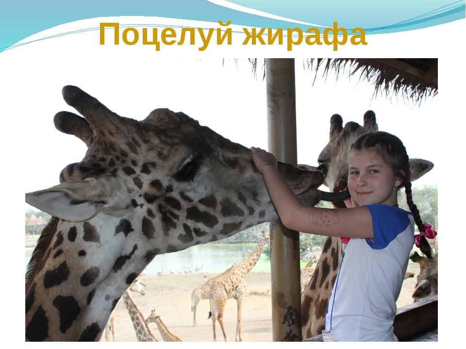 Поцелуй жирафа