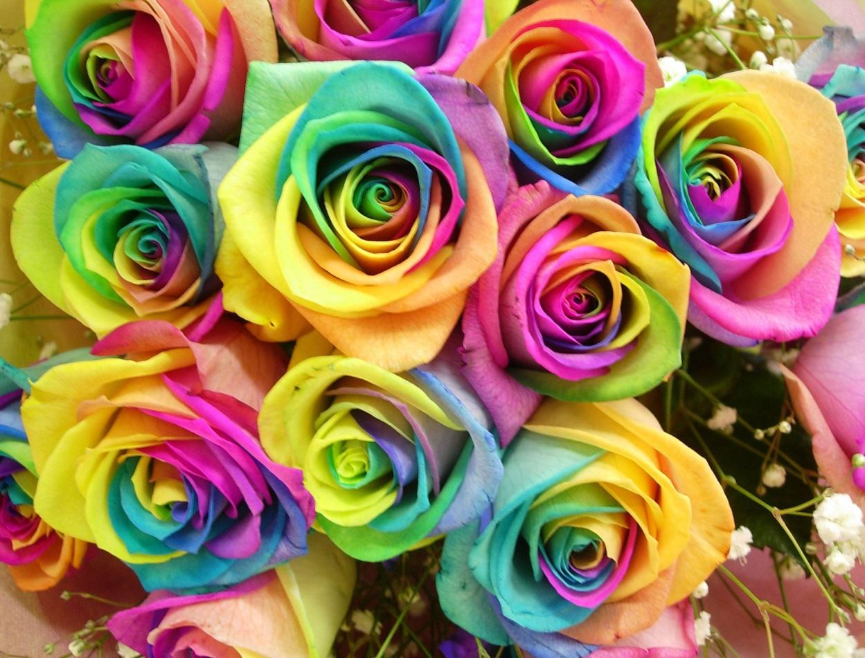 http://kartinki-cvetov.ru/images/rozy/roza137.jpg