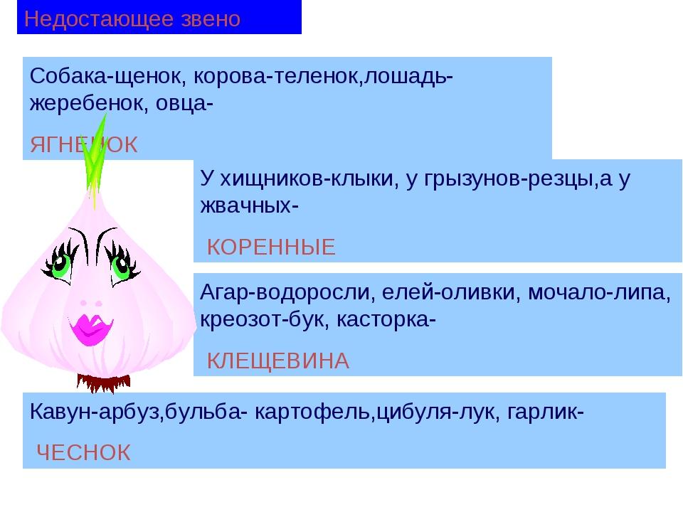 Недостающее звено Собака-щенок, корова-теленок,лошадь-жеребенок, овца- ЯГНЕНО...