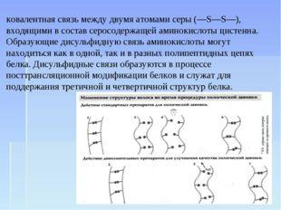 Дисульфи́дные мо́стики, или дисульфи́дная связь — ковалентная связь между дву