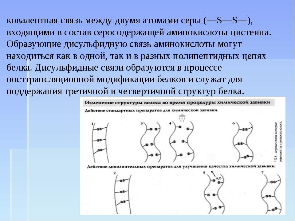 Дисульфи́дные мо́стики, или дисульфи́дная связь — ковалентная связь между дву...