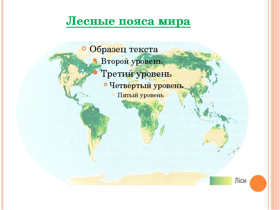 Лесные пояса мира