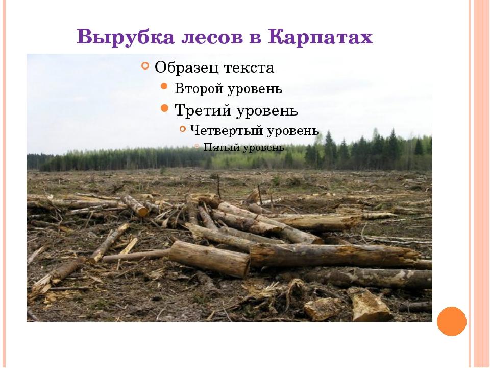 Вырубка лесов в Карпатах