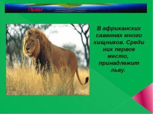 Львы В африканских саваннах много хищников. Среди них первое место, принадле