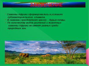 ЗАКЛЮЧЕНИЕ Саванны Африки сформировались в условиях субэкваториального климат