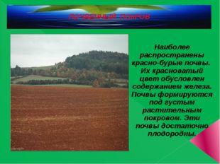 ПОЧВЕННЫЙ ПОКРОВ Наиболее распространены красно-бурые почвы. Их красноватый ц