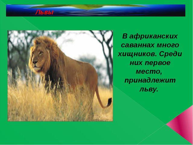 Львы В африканских саваннах много хищников. Среди них первое место, принадле...