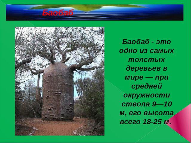 Баобаб Баобаб - это одно из самых толстых деревьев в мире — при средней окруж...