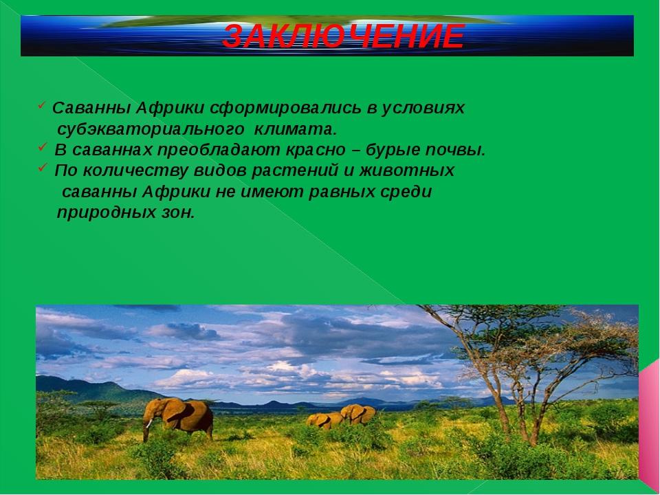 ЗАКЛЮЧЕНИЕ Саванны Африки сформировались в условиях субэкваториального климат...