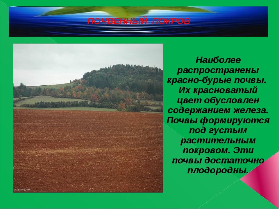ПОЧВЕННЫЙ ПОКРОВ Наиболее распространены красно-бурые почвы. Их красноватый ц...