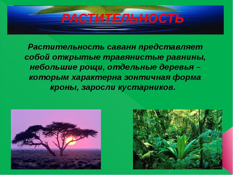 РАСТИТЕЛЬНОСТЬ Растительность саванн представляет собой открытые травянистые...