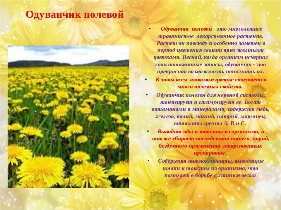 Одуванчик полевой Одуванчик полевой - это многолетнее травянистое лекарственн...