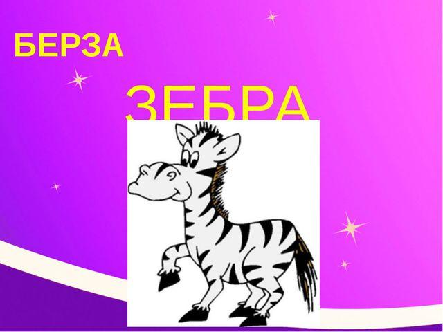 БЕРЗА ЗЕБРА