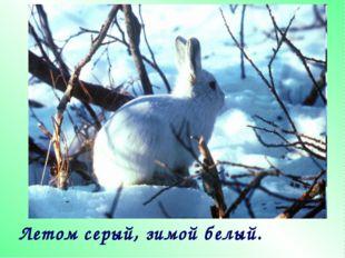 Летом серый, зимой белый.
