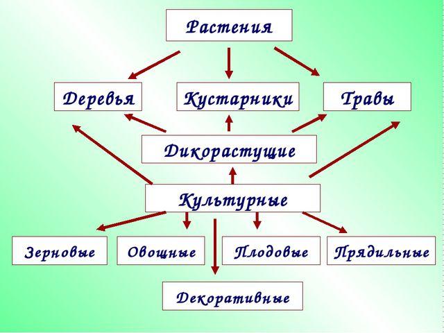 Растения Деревья Травы Дикорастущие Кустарники Культурные Зерновые Прядильные...