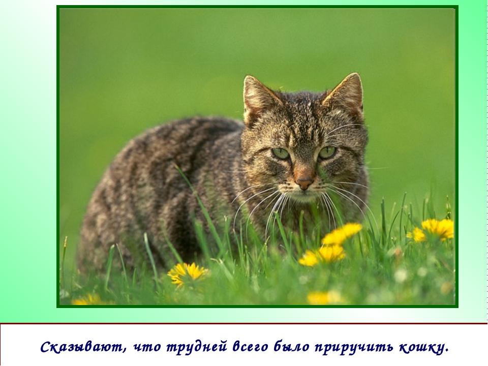Сказывают, что трудней всего было приручить кошку.