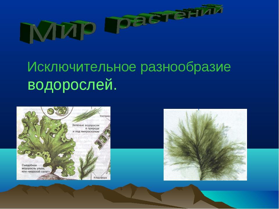 Исключительное разнообразие водорослей.