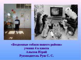 «Бездомные собаки нашего района» ученик 4 в класса Алыхов Юрий Руководитель Р
