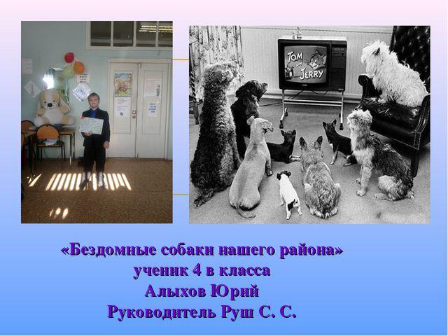 «Бездомные собаки нашего района» ученик 4 в класса Алыхов Юрий Руководитель Р...