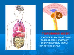 Головной мозг: - главный командный пункт; - важный орган человека; - всем упр