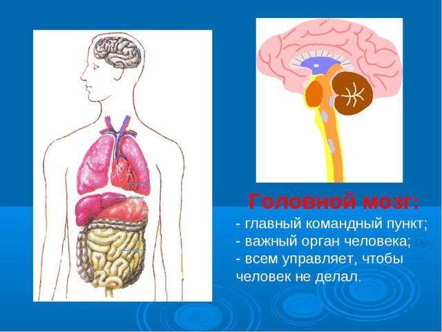 Головной мозг: - главный командный пункт; - важный орган человека; - всем упр...