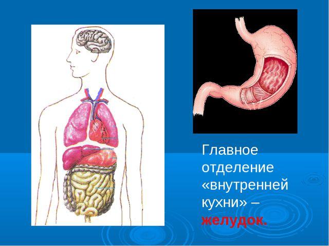 Главное отделение «внутренней кухни» – желудок.