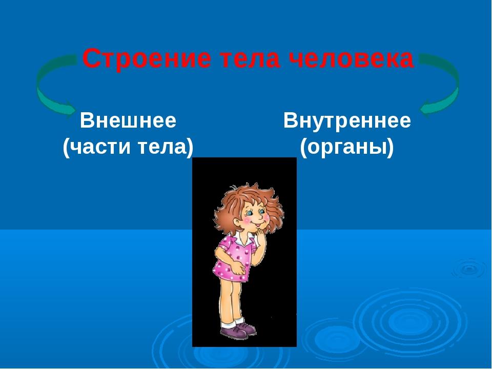 Строение тела человека Внешнее (части тела) Внутреннее (органы)