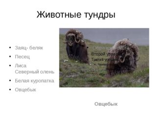 Животные тундры Заяц- беляк Песец Лиса Северный олень Белая куропатка Овцебык