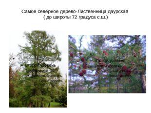 Самое северное дерево-Лиственница даурская ( до широты 72 градуса с.ш.)