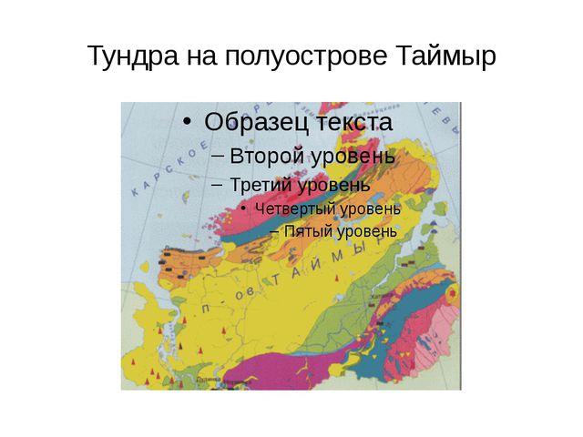 Тундра на полуострове Таймыр