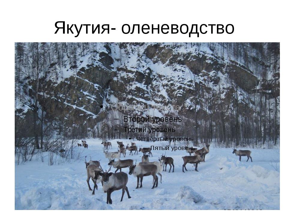 Якутия- оленеводство