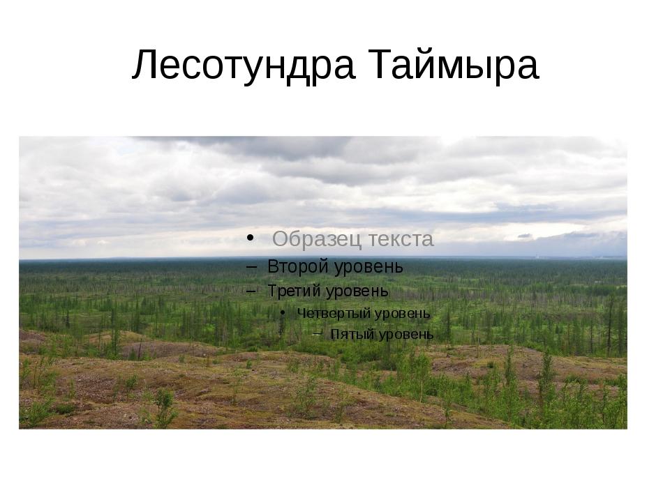 Лесотундра Таймыра мхи, лишайники, лиственницы, ели